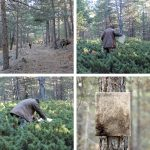 Vlady-Art-2-years-left-in-the-forest