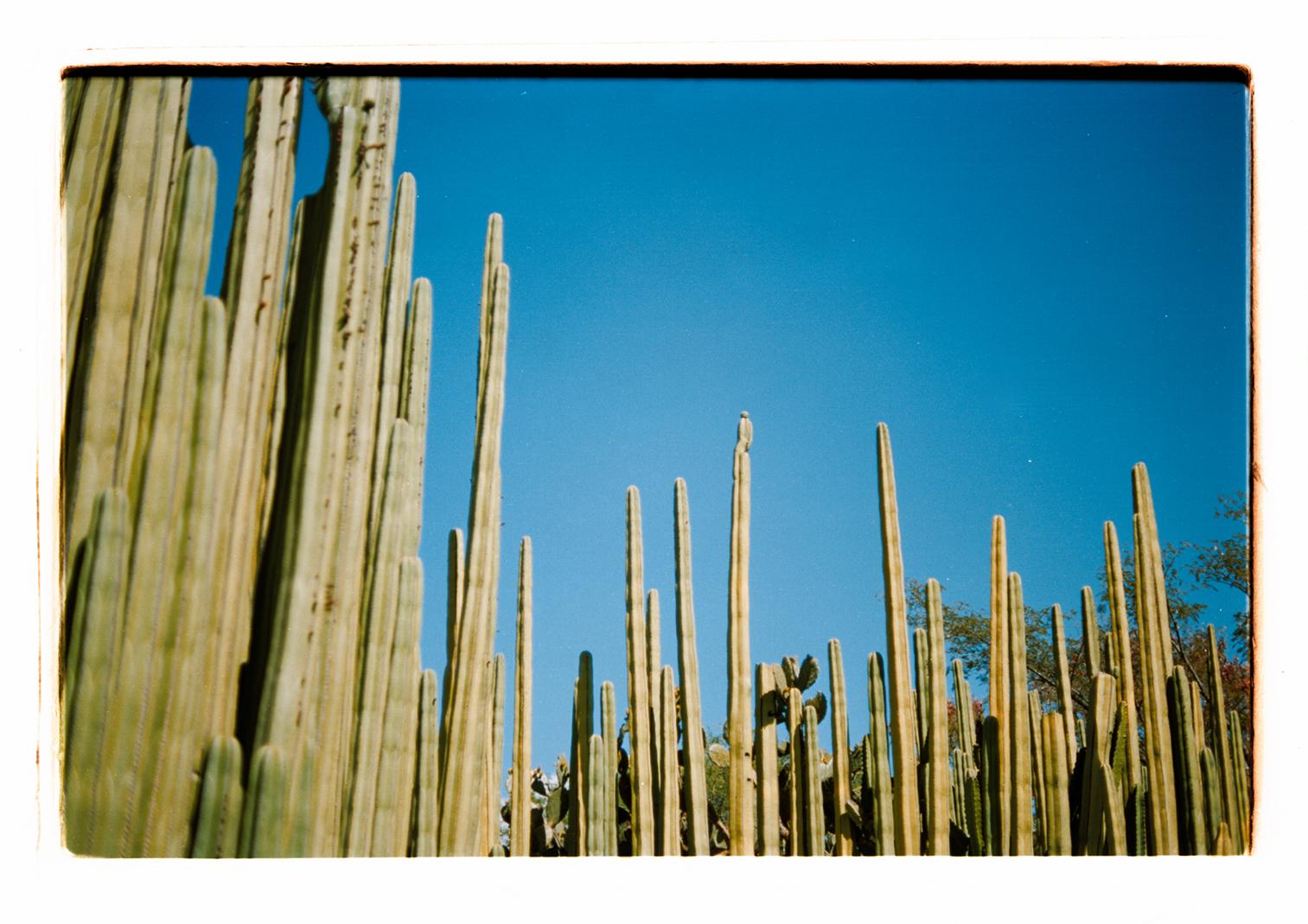 Oaxaca, Laura La Monaca | Collater.al 8