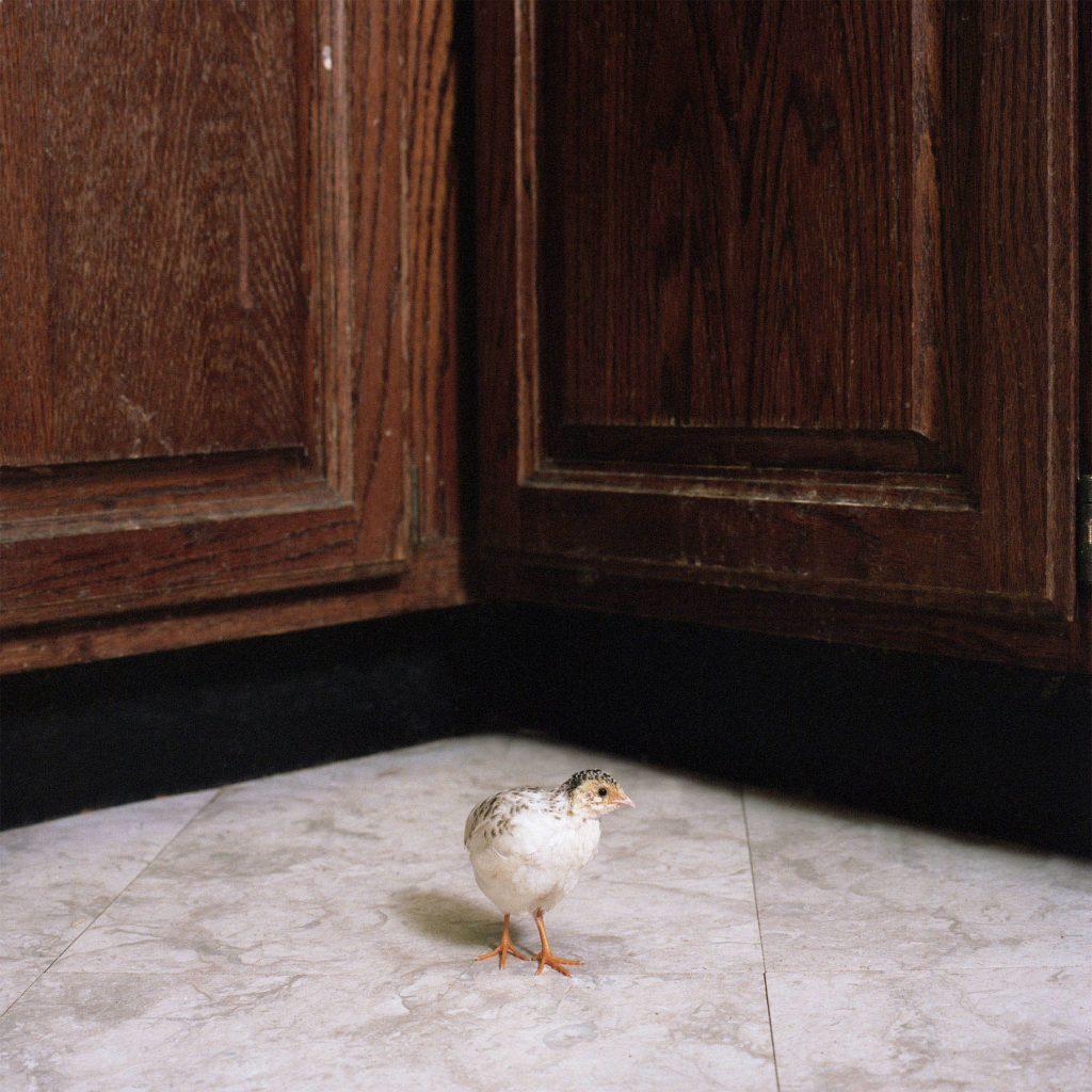 Housebroken, gli animali domestici di Areca Roe1 | Collater.al