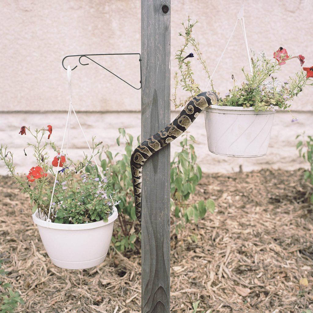 Housebroken, gli animali domestici di Areca Roe10 | Collater.al
