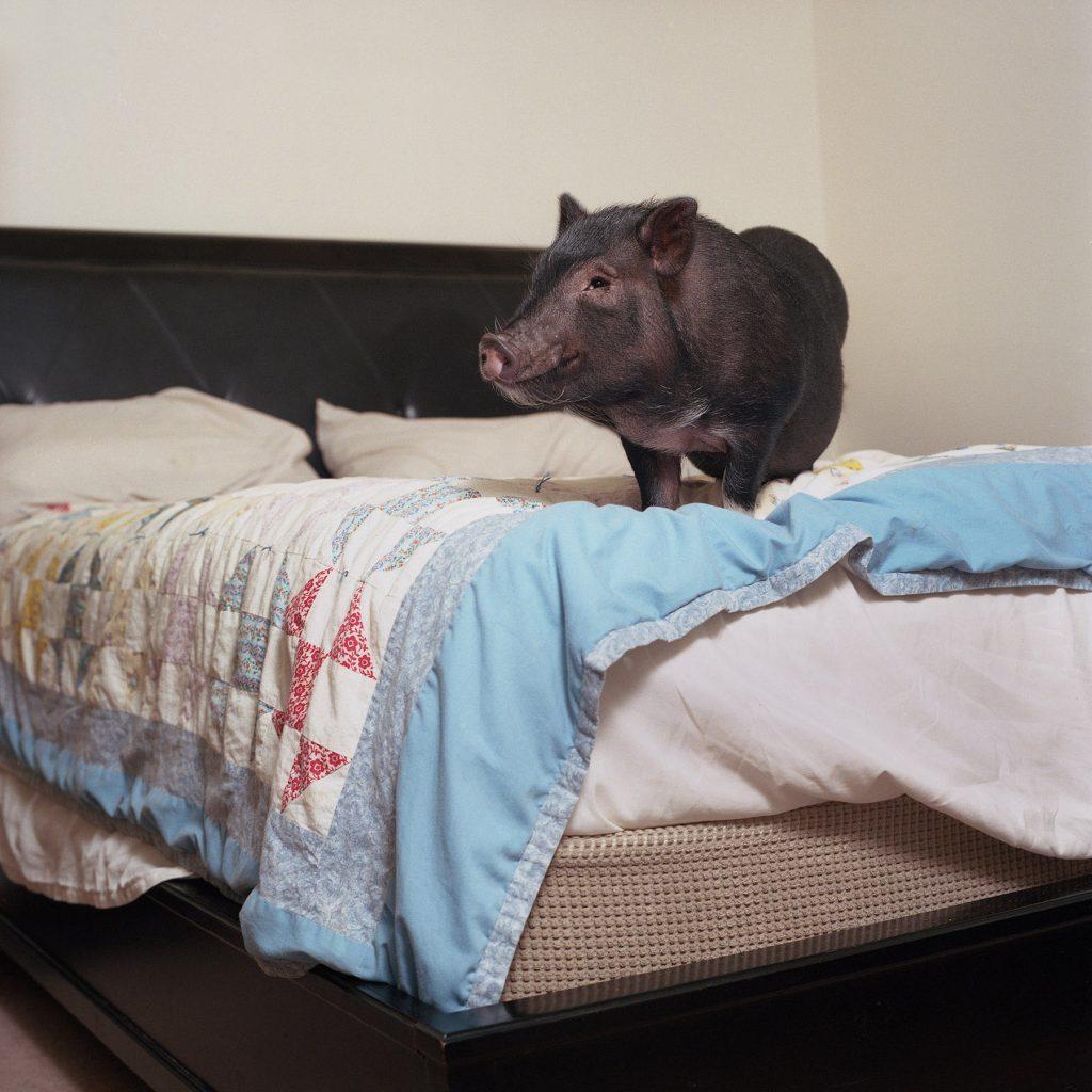 Housebroken, gli animali domestici di Areca Roe2 | Collater.al