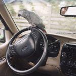 Housebroken, gli animali domestici di Areca Roe4 | Collater.al