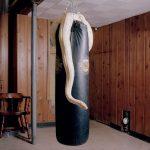 Housebroken, gli animali domestici di Areca Roe5 | Collater.al