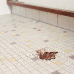 Housebroken, gli animali domestici di Areca Roe9 | Collater.al