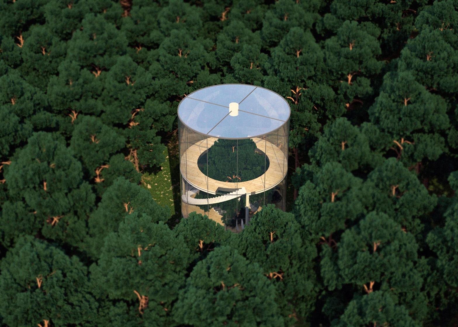 Tree in the house, una casa costruita intorno ad un albero | Collater.al 2