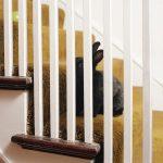 Housebroken, gli animali domestici di Areca Roe | Collater.al
