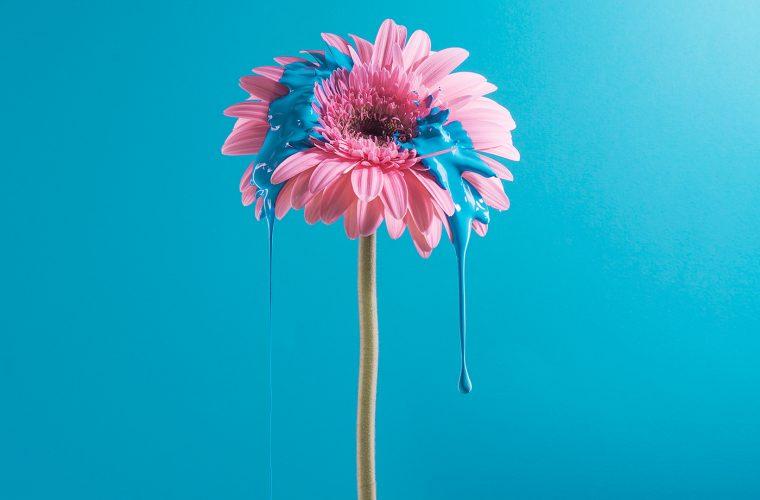 Dripping, the flowers with paint by Cristo Oviedo and Paula Posadas Alvarez