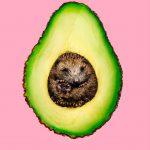 Le immagini di Jonas Loose divertenti e surreali | Collater.al 7
