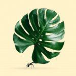 Le immagini di Jonas Loose divertenti e surreali | Collater.al 9a