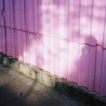 Nick Prideaux cattura la bellezza delle piccole cose | Collater.al 10