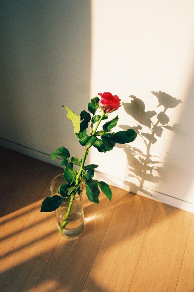 Nick Prideaux cattura la bellezza delle piccole cose | Collater.al 4