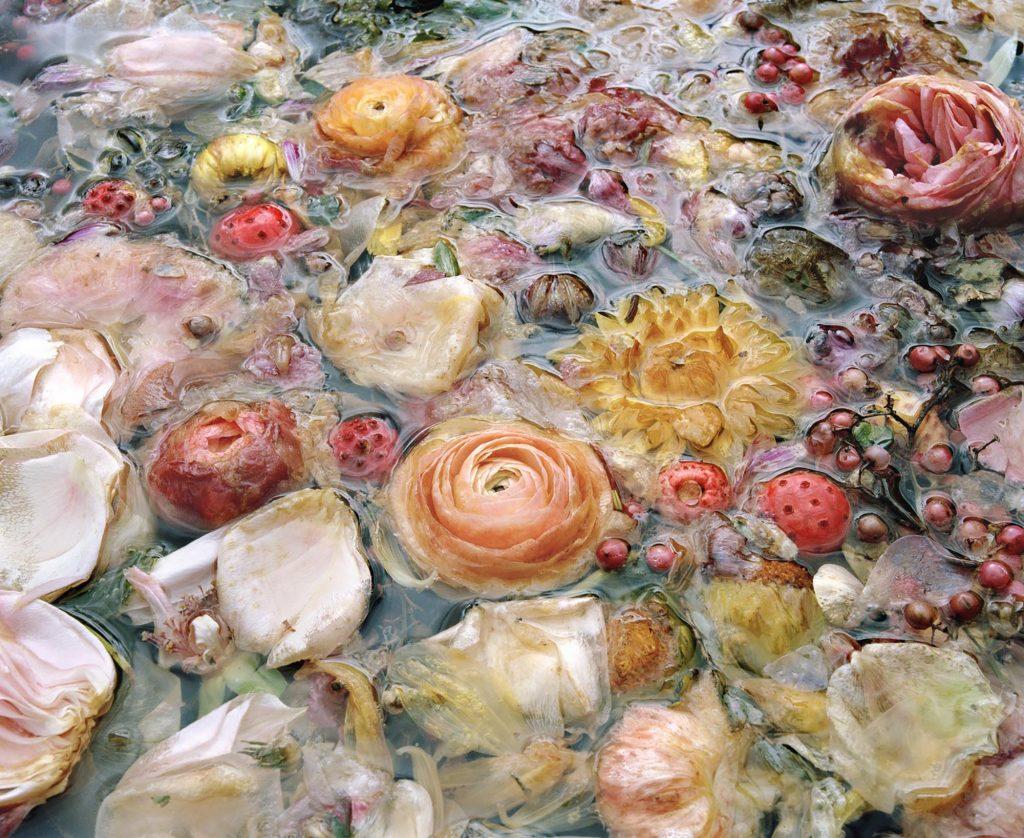 The Appearance of Things- vita e morte nelle foto di Jocelyn Lee | Collater.al 6