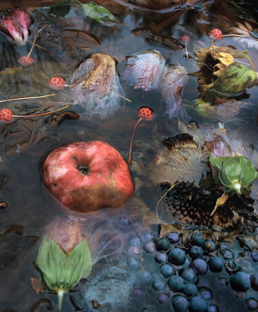 The Appearance of Things- vita e morte nelle foto di Jocelyn Lee | Collater.al 8