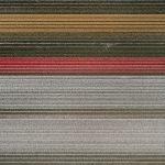 The Tulip Series, Tom Hegen e i campi di tulipani dall'alto | Collater.al 10