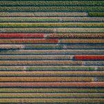 The Tulip Series, Tom Hegen e i campi di tulipani dall'alto | Collater.al 12