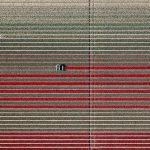 The Tulip Series, Tom Hegen e i campi di tulipani dall'alto | Collater.al 5