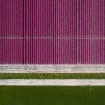 The Tulip Series, Tom Hegen e i campi di tulipani dall'alto | Collater.al 8