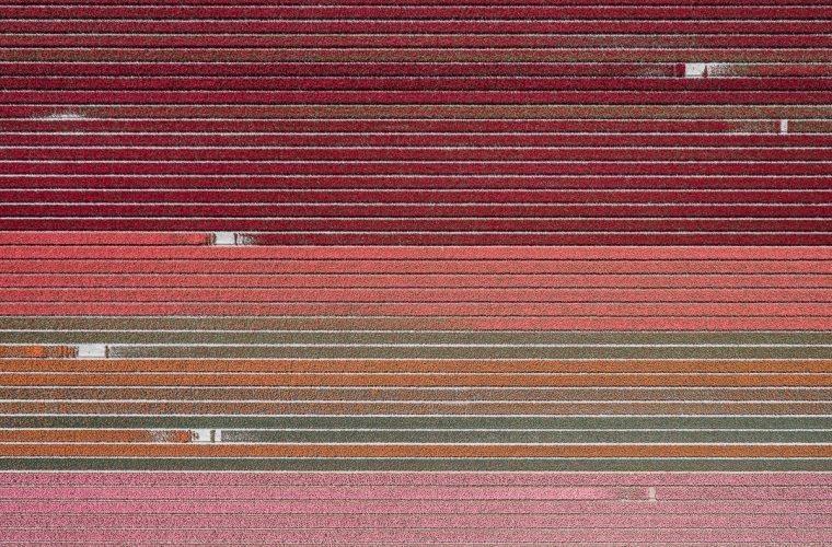 The Tulip Series, Tom Hegen e i campi di tulipani dall'alto