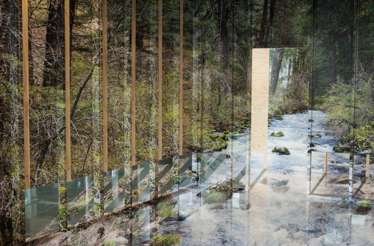 L'installazione tridimensionale di Chris Engman ci porta in un bosco