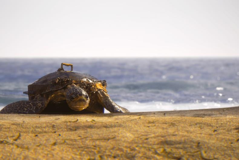 Short video for Breakfast – Hybrid, cosa può causare l'inquinamento degli oceani?