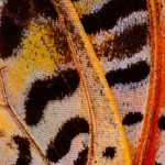 Butterfly Wings | Collater.al