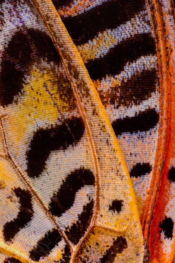 Butterfly Wings, la serie di fotografie macro di Chris Perani
