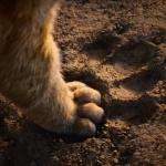 Il Re Leone, primo trailer | Collater.al 5