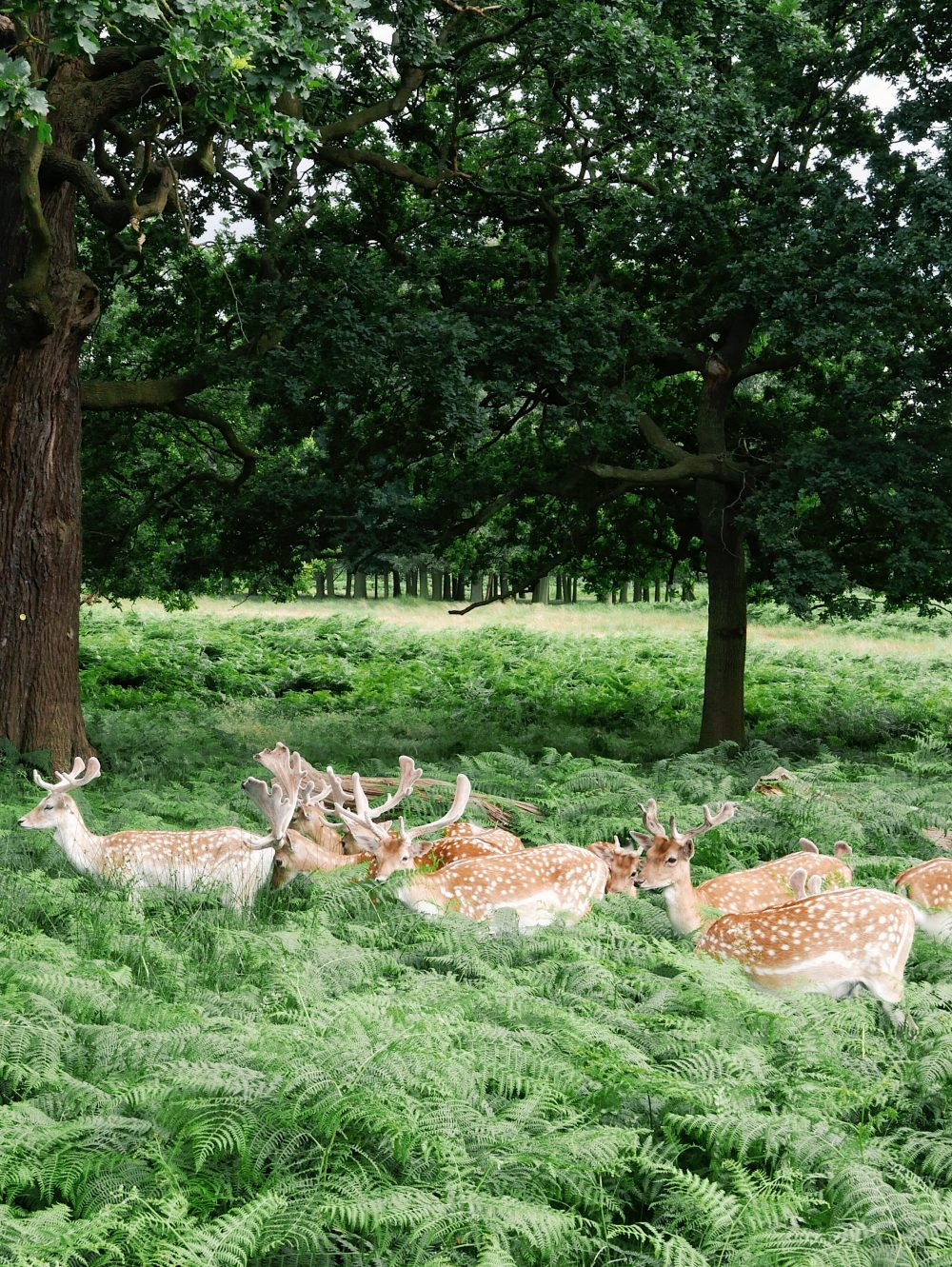 Travel Tips Londra | Collater.al Richmond Park