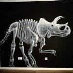 Gli animali di Matt_tieu popolano le città | Collater.al 2