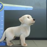 pip southeastern dogs guide | Collater.al 2