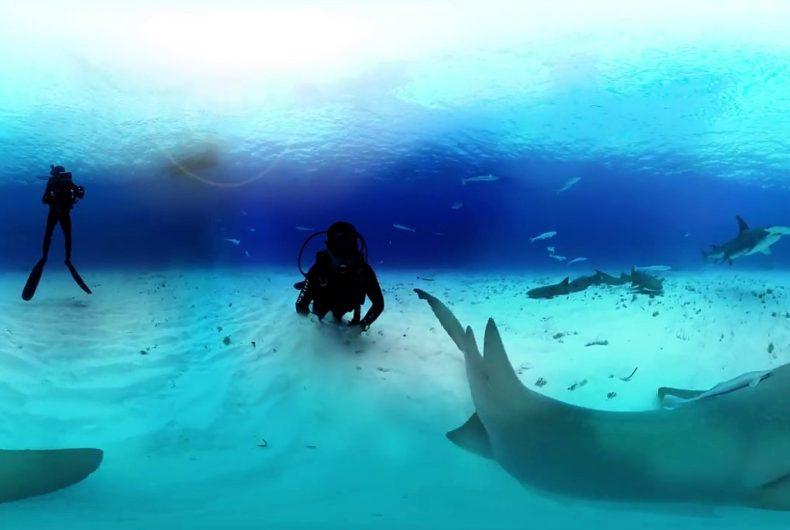 Short video for Breakfast – 360° Great Hammerhead Shark Encounter, a swim with sharks
