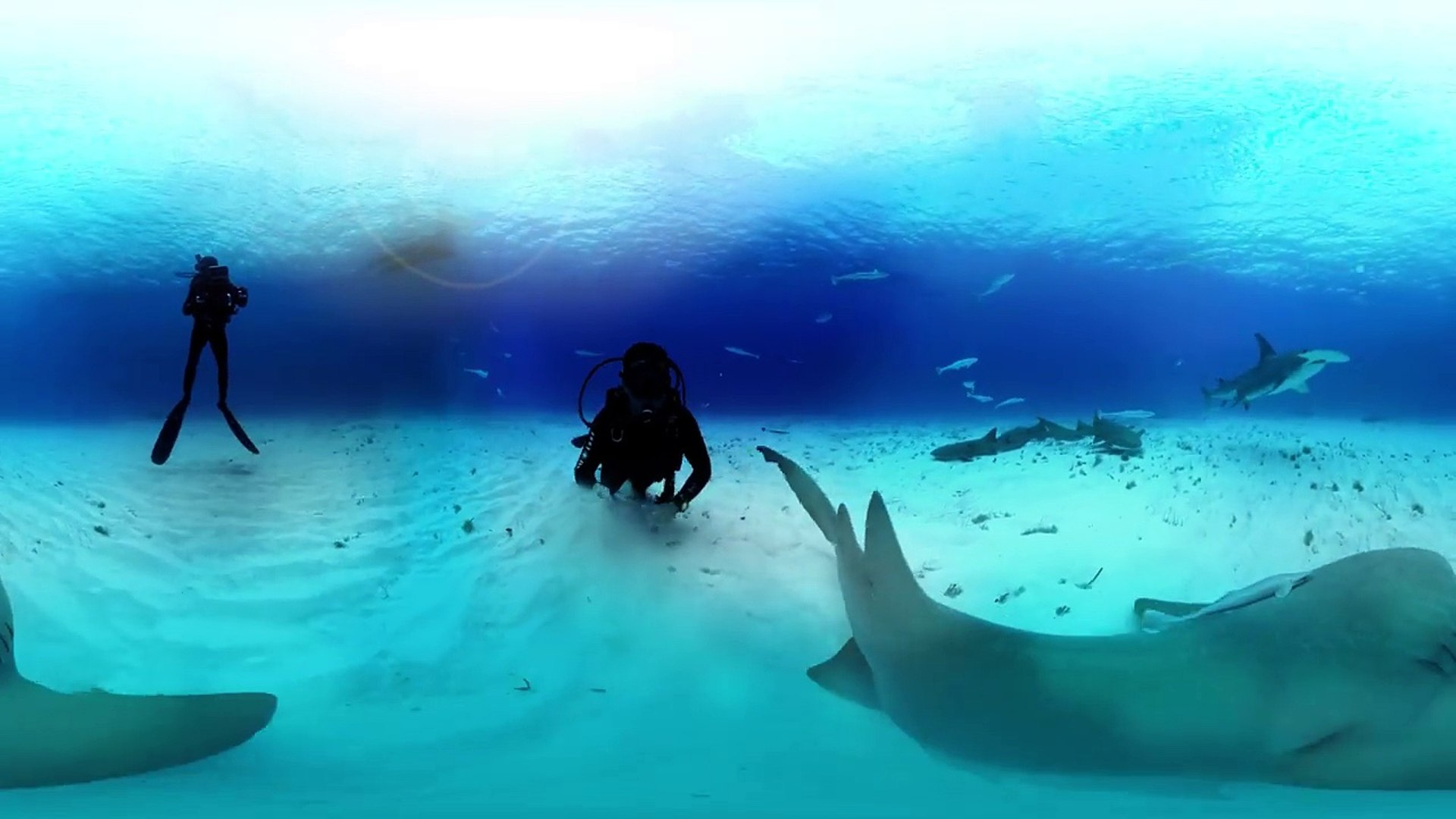 360 Great Hammerhead Shark Encounter | Collater.al
