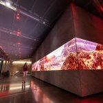 Asteria, installazioni immersive alla Dolby Galley | Collater.al 1