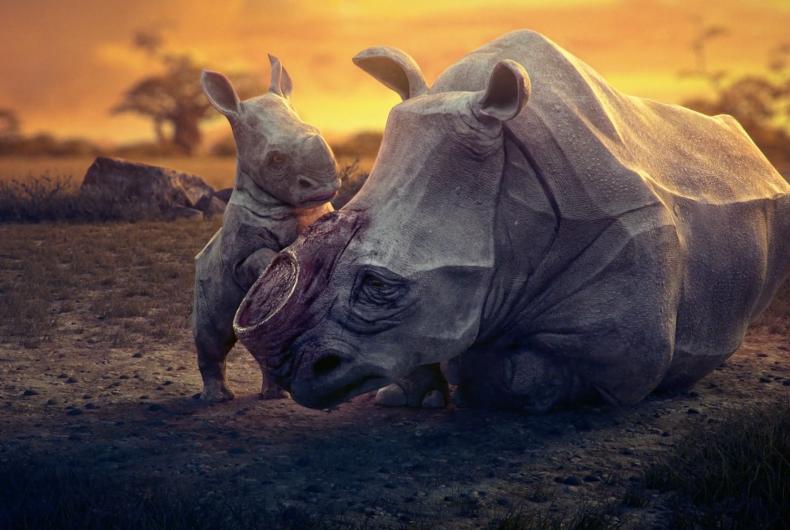 Short video for Breakfast – Dream, quando l'uomo distrugge il sogno della biodiversità