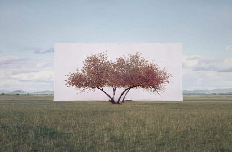 Tree, Myoung Ho Lee captures the beauty of nature
