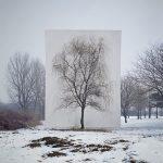 Tree, Myoung Ho Lee cattura la bellezza della natura | Collater.al 4