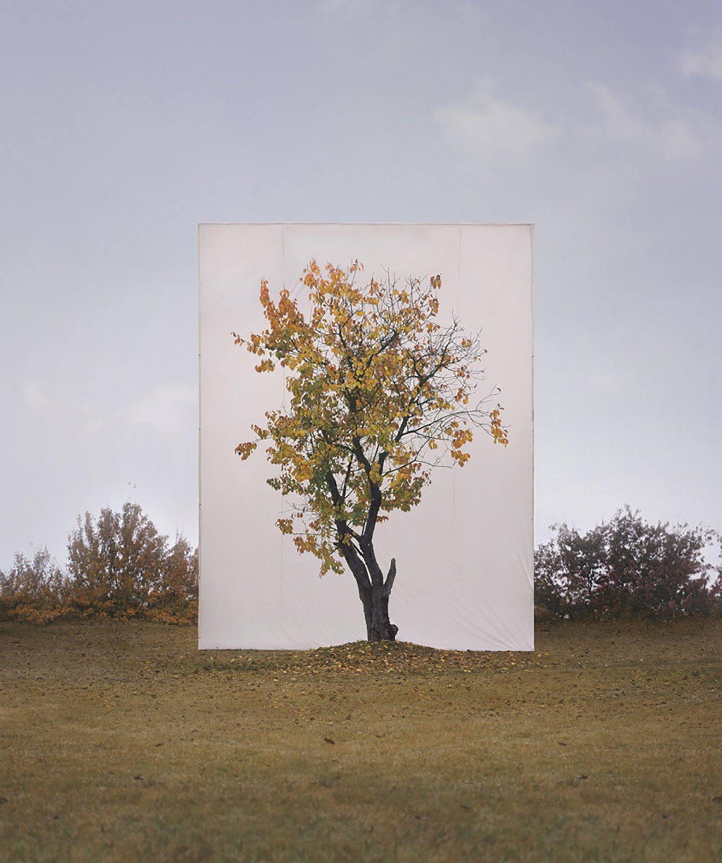 Tree, Myoung Ho Lee cattura la bellezza della natura | Collater.al 1