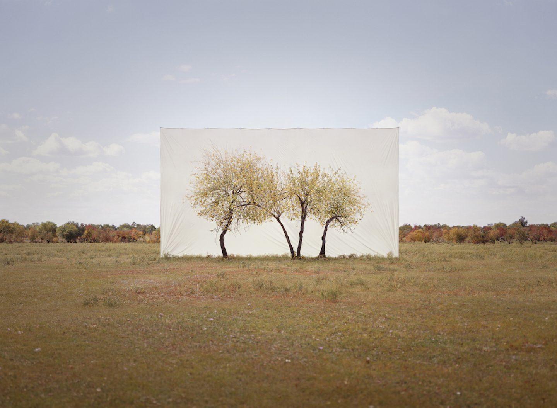 Tree, Myoung Ho Lee cattura la bellezza della natura | Collater.al