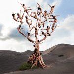 Rob Woodcox sfida la forza di gravità nelle sue immagini | Collater.al 8