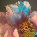 I poetici scatti still life floreali di Doan Ly | Collater.al 1
