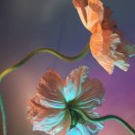 I poetici scatti still life floreali di Doan Ly | Collater.al 4