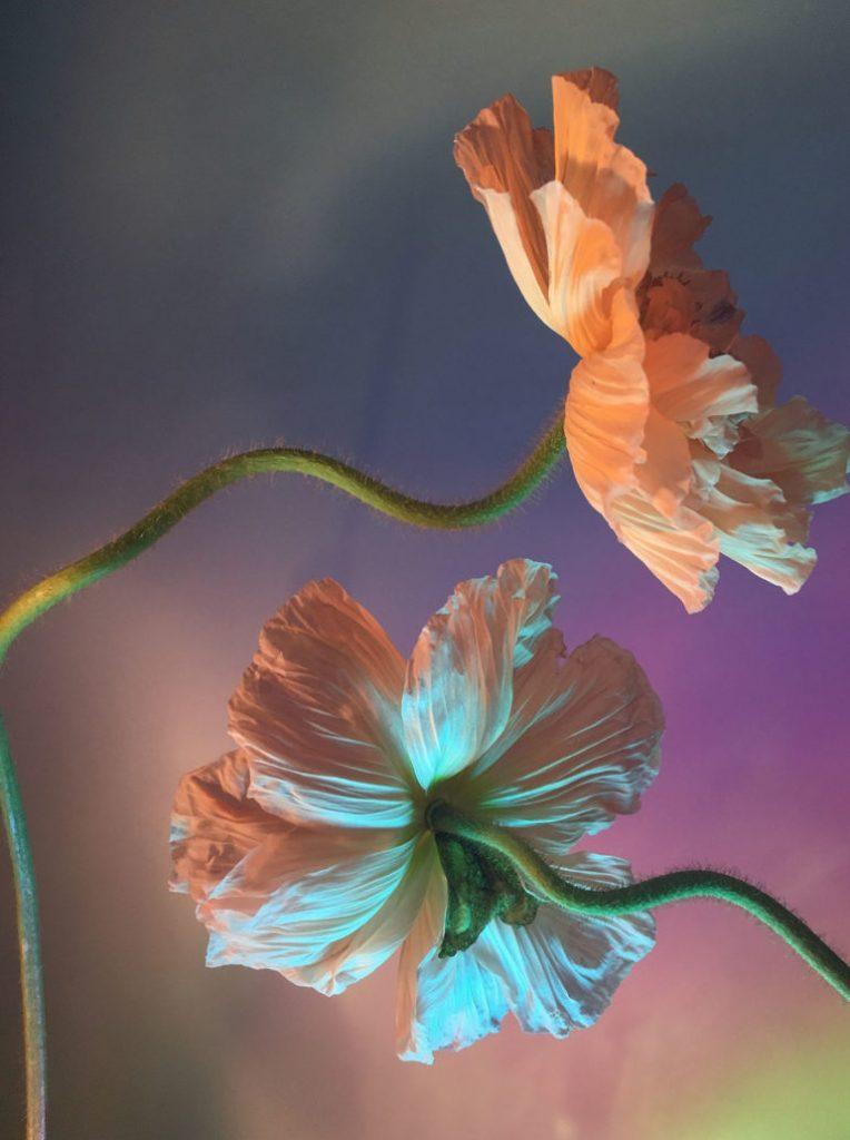 I poetici scatti still life floreali di Doan Ly | Collater.al