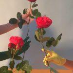 I poetici scatti still life floreali di Doan Ly | Collater.al 5