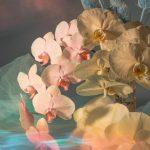 I poetici scatti still life floreali di Doan Ly | Collater.al 7