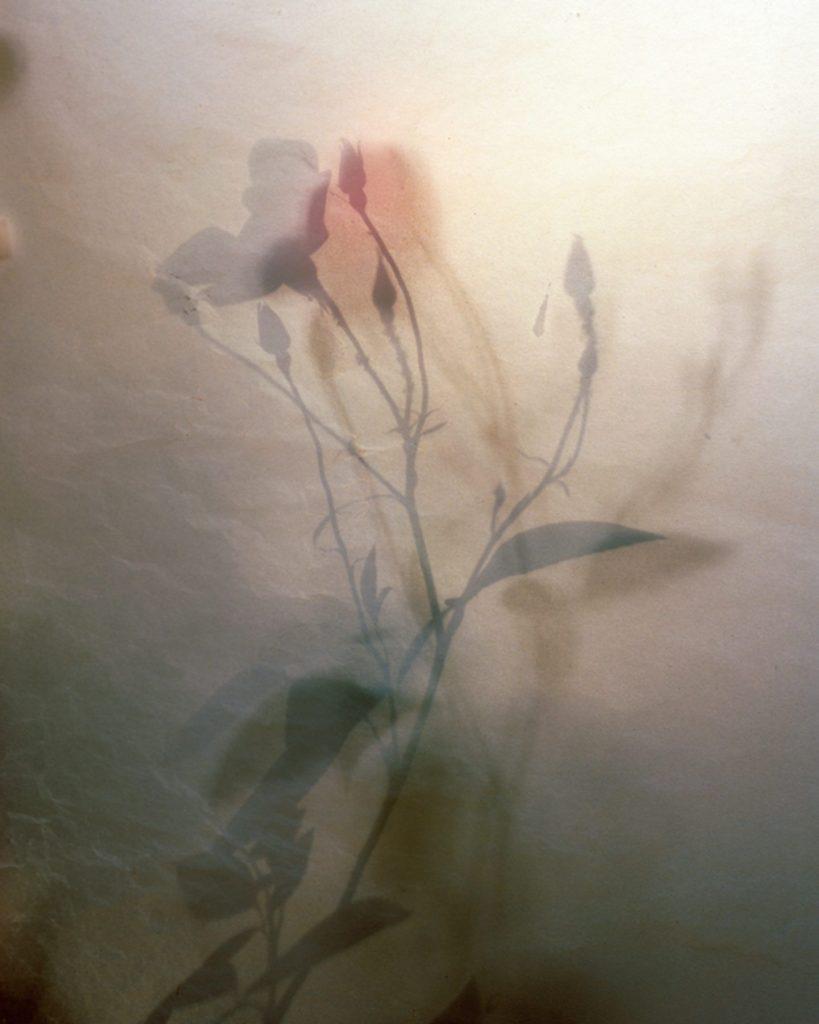 Nich Hance McElroy, l'estetica delle piccole cose | Collater.al