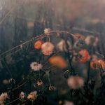 Nich Hance McElroy, l'estetica delle piccole cose | Collater.al 22