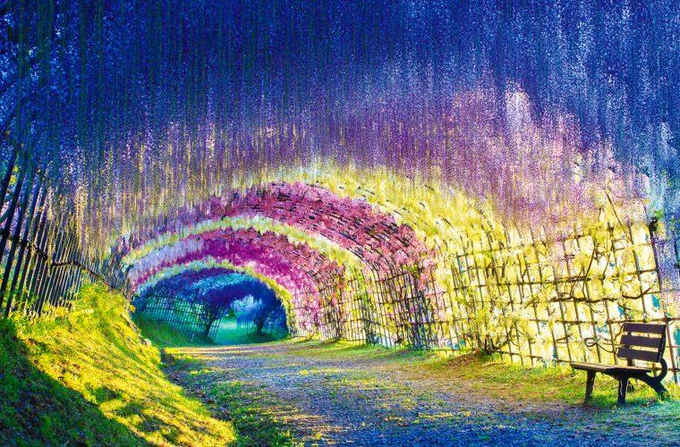 Il tunnel di glicine nella città giapponese di Kitakyushu