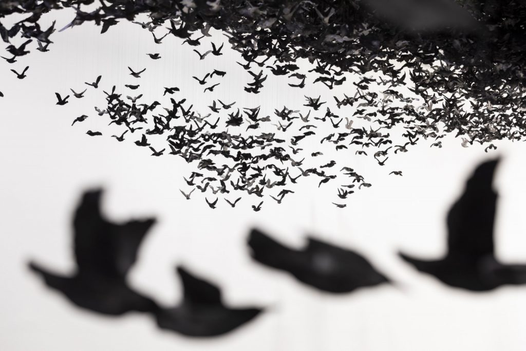 Murmuration Landscape Cai Guo Qiang | Collater.al