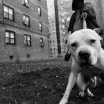 essenza della street photography tutti i demoni di Boogie   Collater.al 17