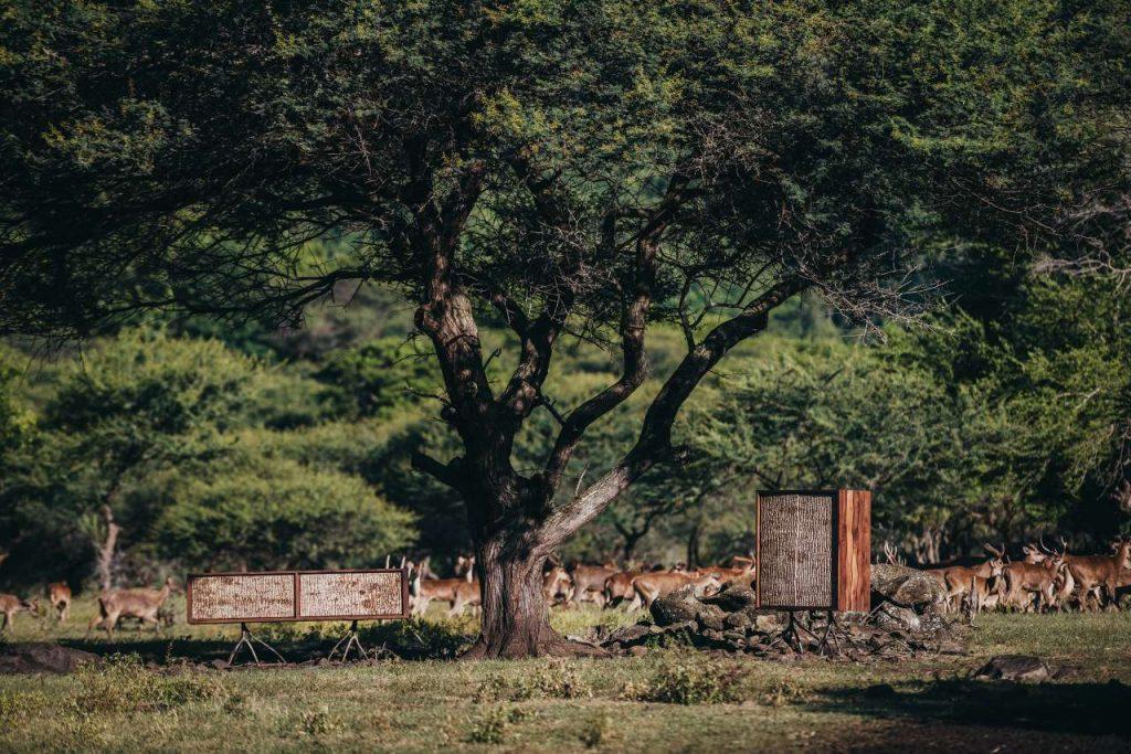 CYPRAEA l'energia delle Mauritius attraverso i mobili   Collater.al